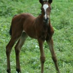 foals reproduction breeding services broodmare