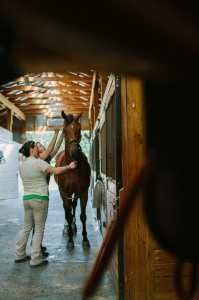 externship blue ridge equine clinic extern opportunities