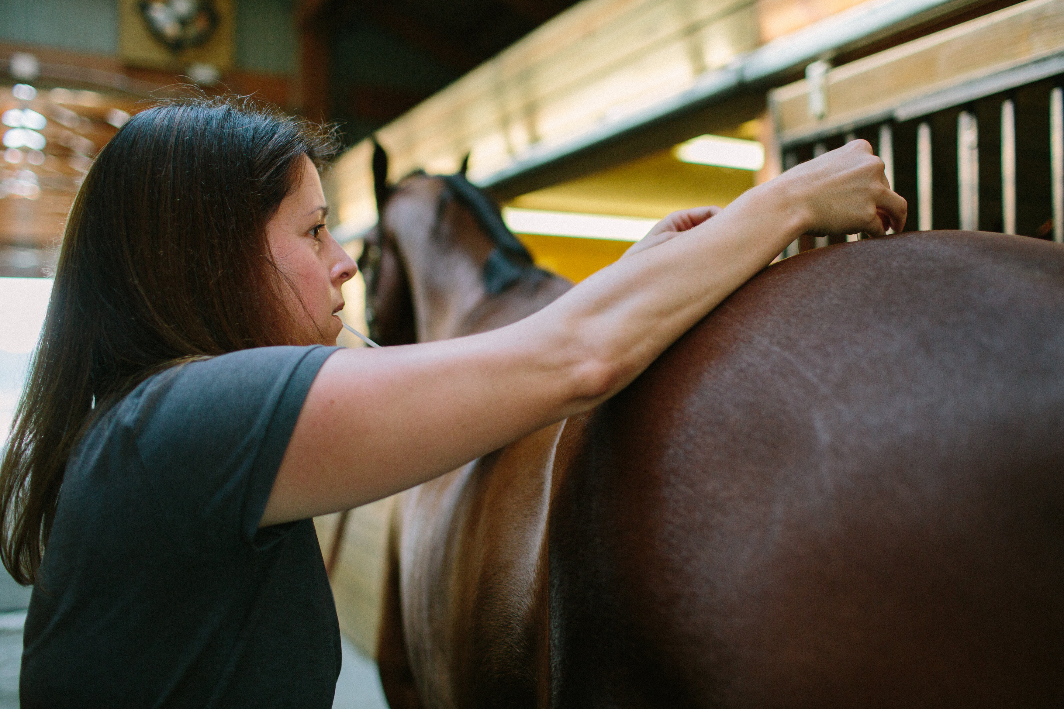 equine acupuncture blue ridge equine clinic