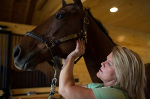 equine chiropractic therapy