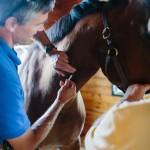 equine vaccination schedule