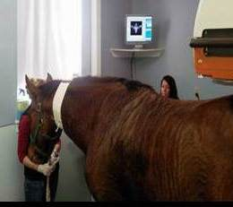 images bone scan horse