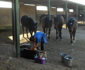 mex police horses