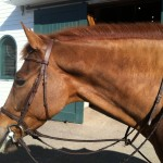 Potomac Horse Fever Information