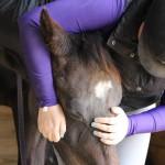 loving on horse