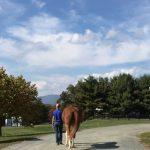 bone-marrow-harvesting-walking-horse